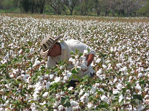 adex también se opone a aplicar sobretasa a algodón importado de ee