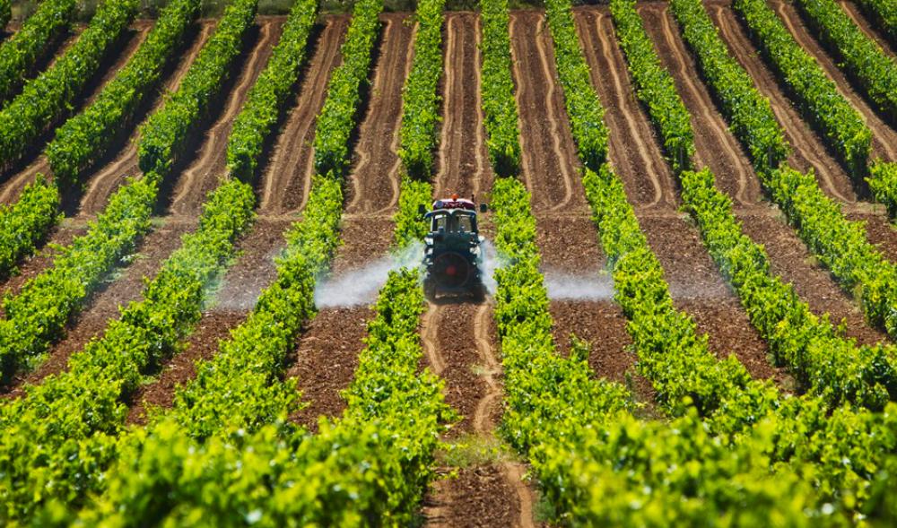 Resultado de imagen para sector agricola y pecuario